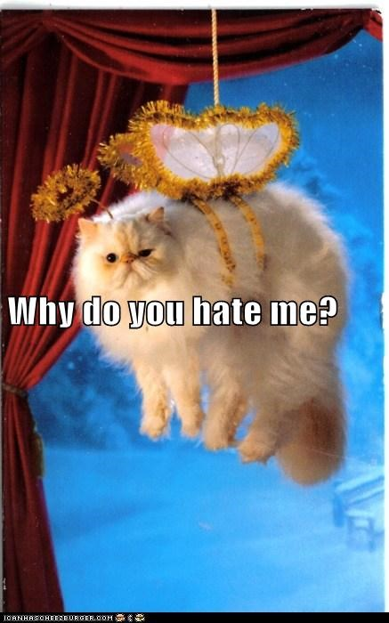 best of the week,caption,captioned,cat,costume,do not want,dressed up,Hall of Fame,hanging,hate,ornament,persian,question,why