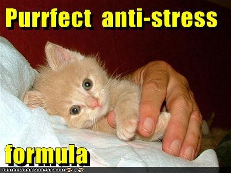 caption captioned cat cuddling kitten perfect pun stress - 5564282112
