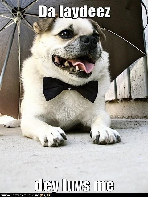 beagle,flirt,ladies man,mixed breed,pug,puggle,umbrella