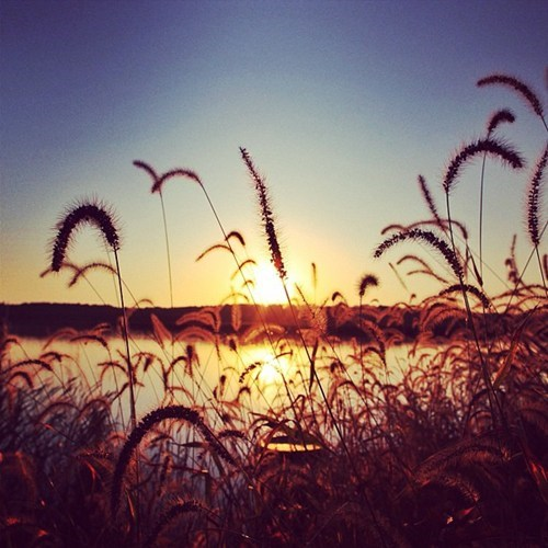 getaways,lake,reeds,sunset,unknown location,water