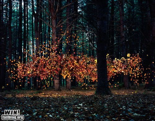 art fall Forest leaves photography - 5564971776