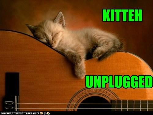acoustic asleep caption captioned cat guitar kitten sleeping unplugged - 5564984576