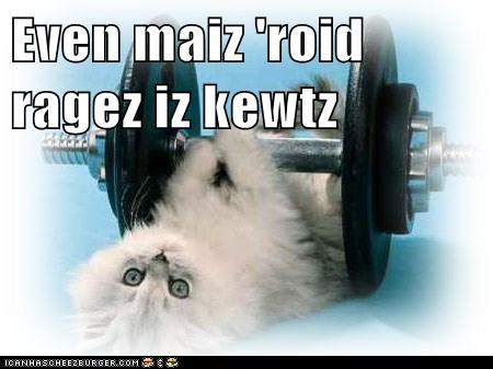 caption captioned cat cute even kitten lifting my rage steroid weight - 5565118464