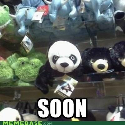 panda,SOON,toys