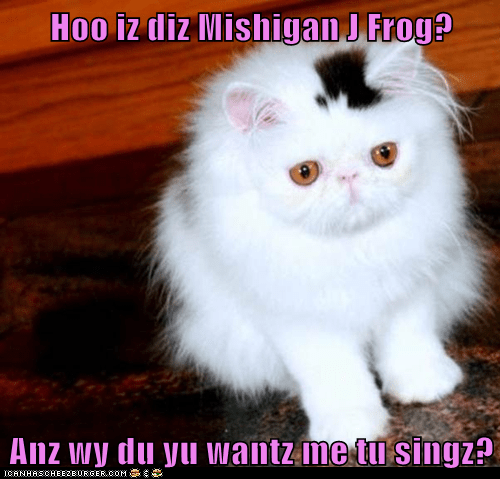Cheezburger Image 5565454080