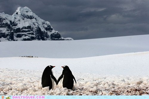 bird flightless flippers Hall of Fame hands holding love lovebirds penguin penguins pun - 5565554944