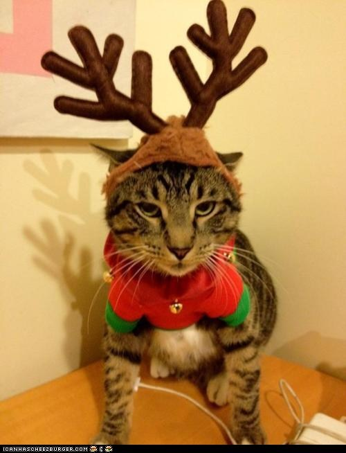 advent calendar,antlers,christmas,costume,cyoot kitteh of teh day,holidays,not happy,reindeer
