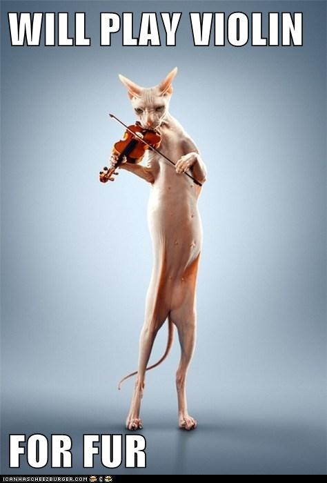 caption captioned cat for fur play sphynx violin will - 5565733120