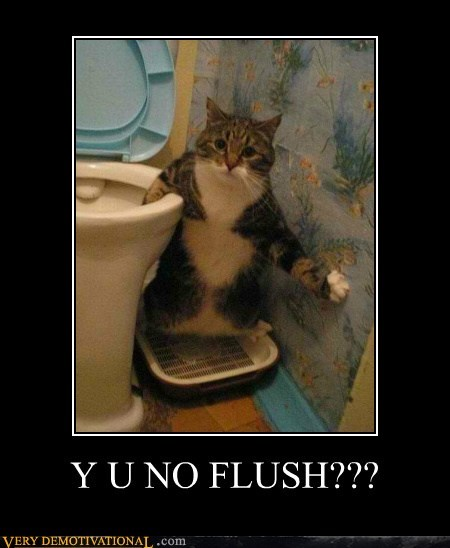 flush hilarious kitty poop Y U NO