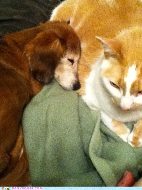 BFFs cat dogs friends friendship heartbreaking heartwarming Interspecies Love love r-i-p reader squees story touching - 5566444800