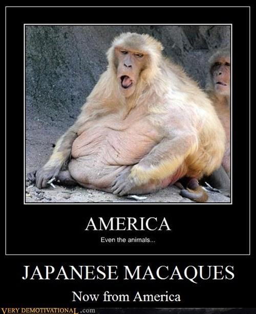animals ape hilarious macaques - 5566721536