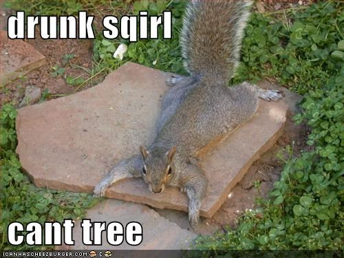 cant caption captioned drunk lolwut squirrel tree - 5566800896