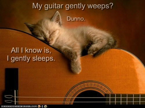 animal asleep beatles cat guitar gently weeps I Can Has Cheezburger kitten sleeping - 5566862080