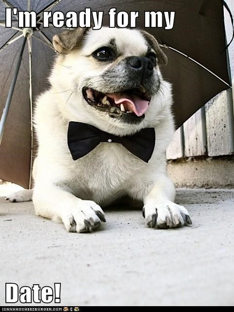 bowtie,date,dogs,i has a hotdog,pug,umbrella