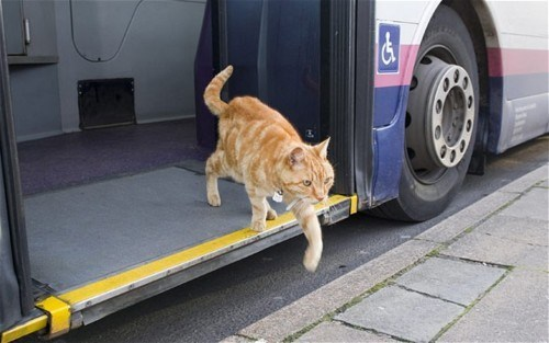 kitteh Look At This Cat - 5567644672