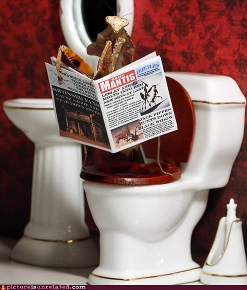 bathroom insect newspaper wtf - 5567945216