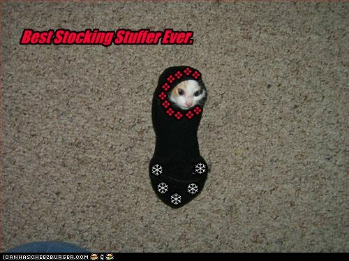 best,caption,captioned,cat,ever,stocking,stocking stuffer,stuffer
