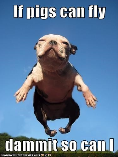 best of the week fly flying french bulldogs Hall of Fame when pigs fly - 5568062208