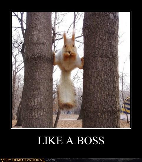 animals eating hilarious squirrel tree - 5568203776