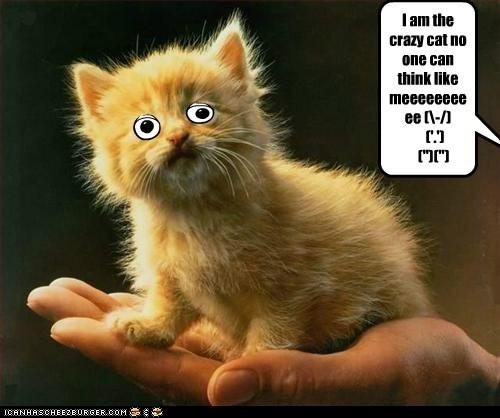 """I am the crazy cat no one can think like meeeeeeeeee (-/)          ('.')    ("""")("""")"""