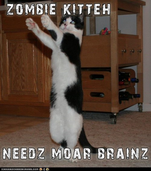 animals,best of the week,brains,cat,Hall of Fame,I Can Has Cheezburger,zombie,zombie kitteh