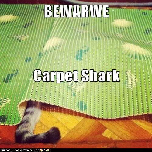 beware,caption,captioned,carpet,cat,hiding,shark,tail