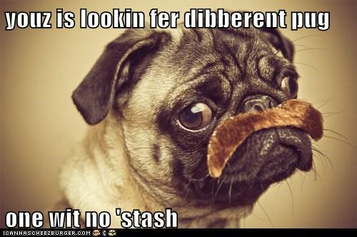 youz is lookin fer dibberent pug one wit no 'stash