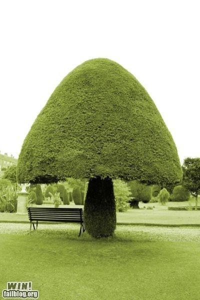 cut,hedge,mushroom,park,tree