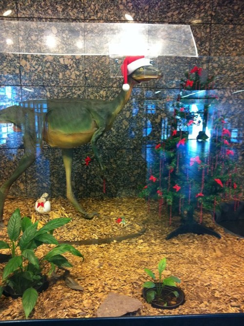 christmas,decorations,dinosaur,museum,santa hat,store display