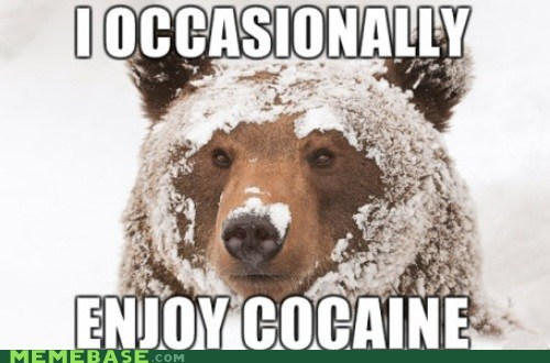 bears,Memes,the white stuff