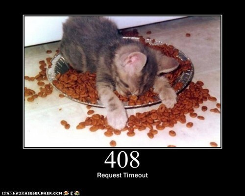 funny cat meme of a cat passed out on his food