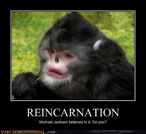 hilarious michael jackson monkey reincarnation - 5569418752