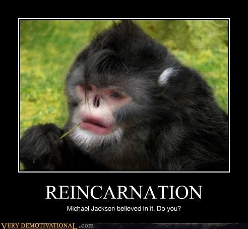 hilarious michael jackson monkey reincarnation - 5569418752