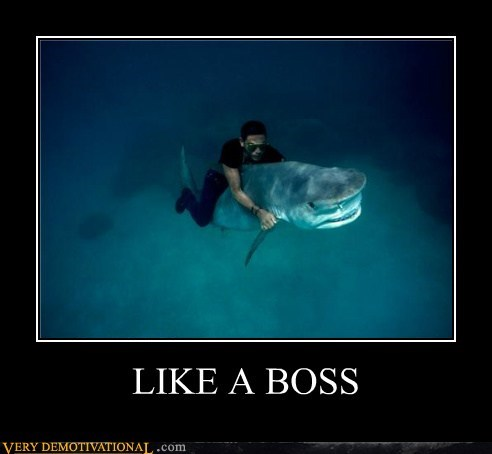 Like a Boss Pure Awesome shark - 5569850624