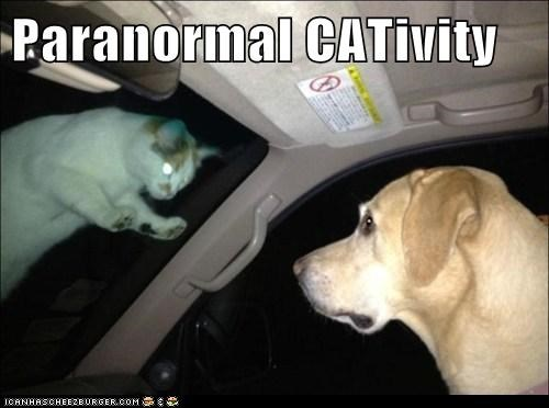 cat,labrador retriever,paranormal,paranormal activity,paranormal cativity