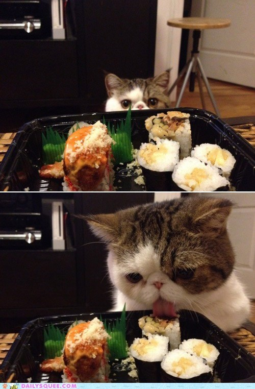 acting like animals,cat,do want,emminent domain,Hall of Fame,nomming,noms,pun,rule,sushi