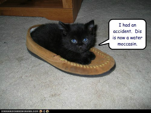 accident,caption,captioned,cat,had,I,kitten,moccasin,now,pun,shoe,transformation,water