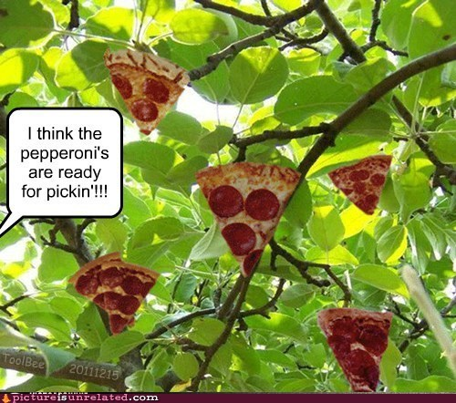 pepperoni pizza is a vegetable tree wtf - 5570235392