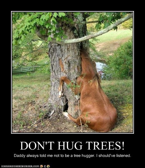 DON'T HUG TREES! Daddy always told me not to be a tree hugger. I should've listened.