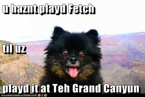 awesome fetch grand canyon happy dog play fetch whatbreed - 5570871552