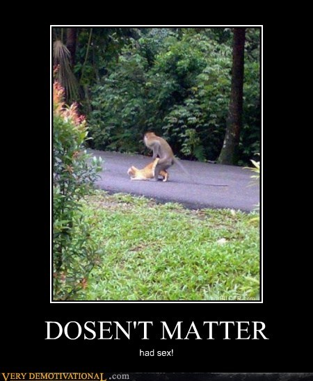 animals cat doesnt matter hilarious monkey - 5571570944