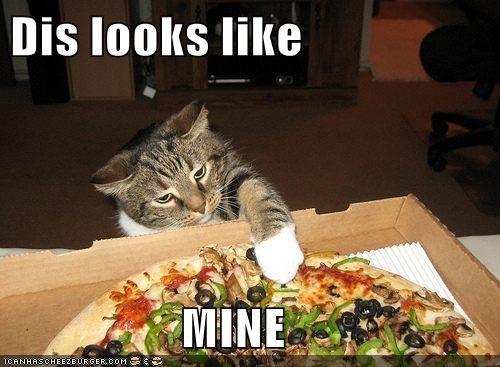 cat delicious food I Can Has Cheezburger mine noms pizza - 5571837696