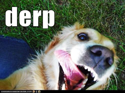 awesome derp derp face golden retriever silly dog