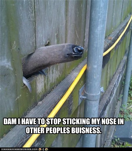 animals anteater nose nosey other-peoples-business - 5572137472