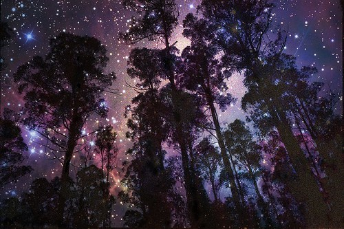 amazing composition Forest getaways Hall of Fame infinite space mixed media stars universe - 5572250880