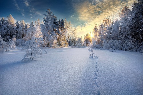 footprints in the snow,Forest,getaways,peace,snow,trees,white,winter