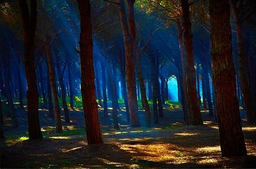 blue green,Forest,getaways,gold,Hall of Fame,sunbeams,sunbreaks,unknown location,vivid colors
