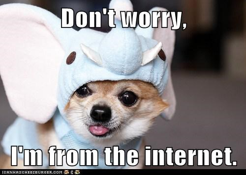 adorbz,chihuahua,costume,cute,dont worry,elephant,elephant costume,im-from-the-internet,tongue,tongue out