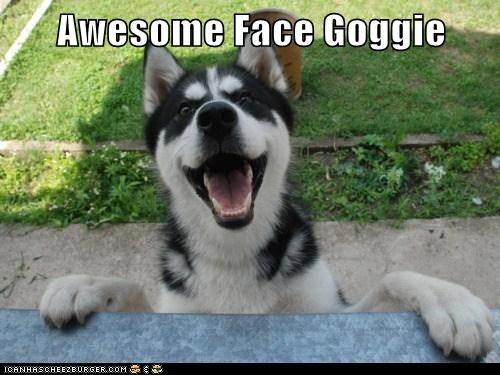 awesome face,happy dog,husky,smile,smiles,smiling