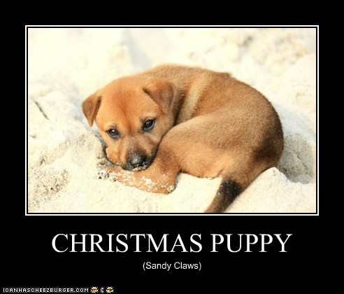 CHRISTMAS PUPPY (Sandy Claws)